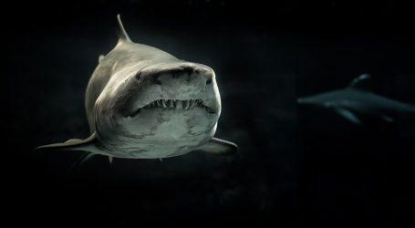 Surferi u Australiji uspjeli otjerati morskog psa