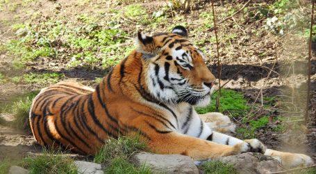 Brojne životinje posjetile uređeno pojilo u rezervatu na Tajlandu