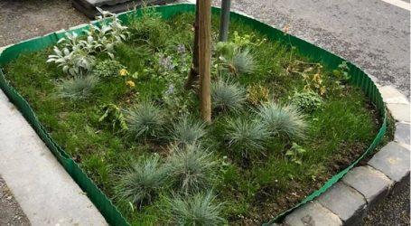 Sadnja cvijeća: Kako je vrt u Preradovićevoj ulici izazvao pravu cvjetnu revoluciju