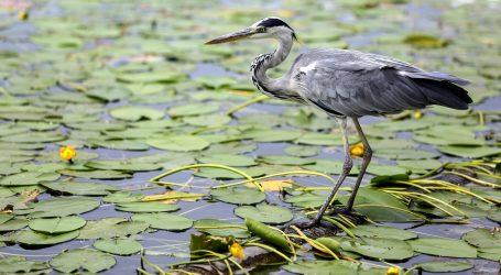 U Nacionalnom parku Everglades žive brojne ptičje vrste
