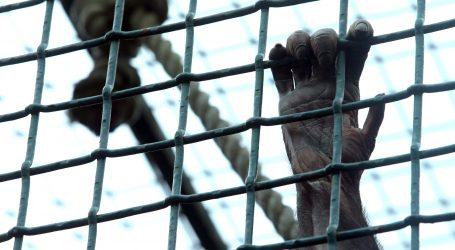 Neobičan prosvjed za bolje postupanje prema životinjama u zatočeništvu
