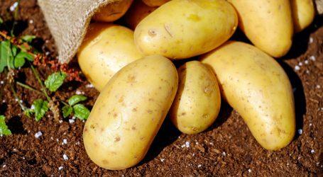 Poticaji 100 milijuna kuna za izgradnju skladišnih kapaciteta za krumpir