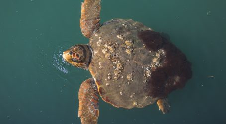 Senegalski ribari brinu o morskim kornjačama