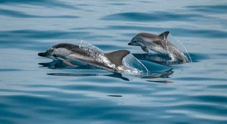 Važno ih je sačuvati: Kako se ponašati s dupinima, kitovima i morskim kornjačama?