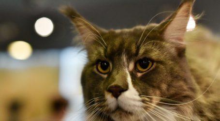 Upoznajte najpoznatiju mačku u Turskoj