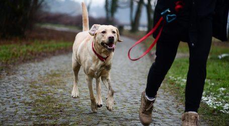Izgubljeni pas Cleo se vratio u svoj stari dom