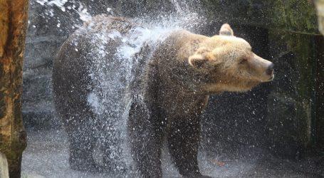 Medvjed se odlučio osvježiti u vrtu kalifornijske obitelji