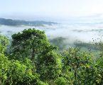 Ubrzana deforestacija Amazonije