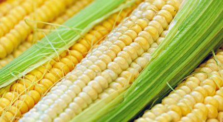 Na američkom Festivalu kukuruza nudi se i sladoled od žutih zrna