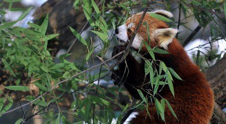 Životinje se protiv vrućina bore i hlađenjem na ledu