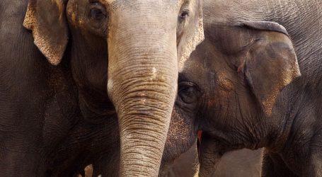 Varšavski ZOO slonovima daje CBD kako bi ih pokušao izvući iz depresije