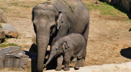 """Meksički zoo prenosio rođenje slonića """"Zoom"""""""