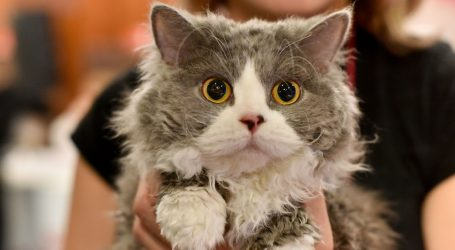 Mačka utažila žeđ koristeći aparat za vodu