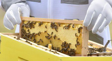 Brojne pčelinje košnice na strmoj azijskoj litici