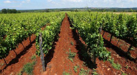 Sud EU u srijedu odlučuje o sporu oko vina teran