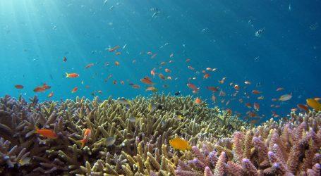 Pogledajte kako ronioci stvaraju umjetni koraljni greben