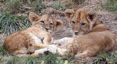 Pogledajte prizore ovogodišnje migracije životinja u Africi