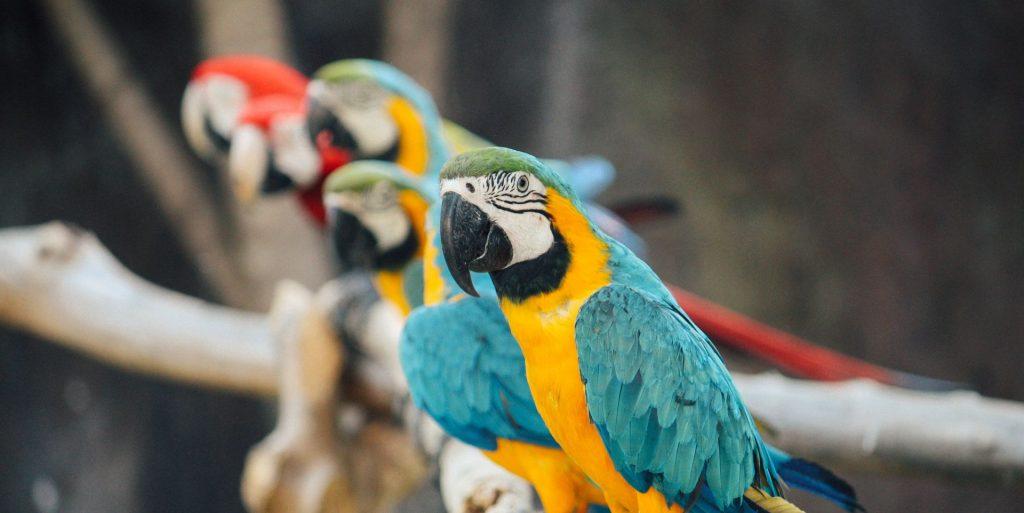 NEPRESTANO PSOVALE? Papige 'sklonjene' iz engleskog parka zbog djece