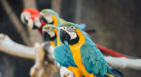 Papige 'sklonjene' iz engleskog parka, neprestano su psovale posjetitelje