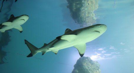 Australski istraživači infracrvenim kamerama proučavaju ponašanje morskih pasa