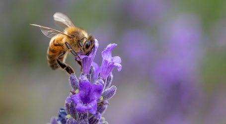 Tunis koristi tehnološka rješenja u pčelarstvu i poljoprivredi