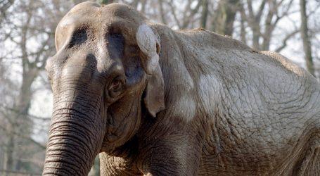 Slonovi žive u harmoniji s ljudima u kineskoj provinciji Junnan