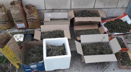 Na Visu zaplijenjeno 25 kilograma marihuane