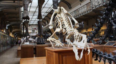Pariz: Kostur američkog alosaura prodan za tri milijuna eura