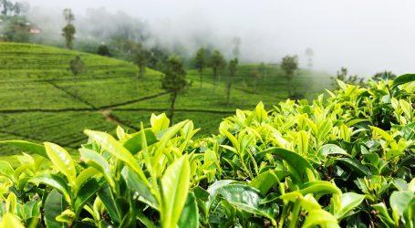 Azijski recept za Kahwa čaj je vrlo popularan