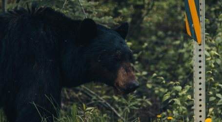 Medvjed lutao hotelom u Coloradu