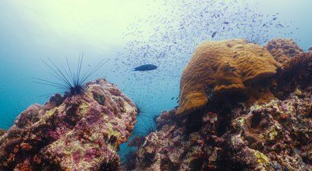 Australski Veliki koraljni greben se proteže na još većem području