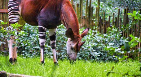 Londonski zoološki vrt ima novog stanovnika