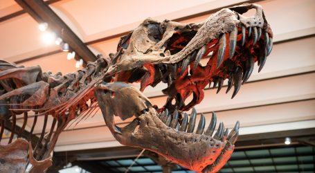Tiranosaur Stan prodan za rekordnu sumu od 31.8 milijuna dolara
