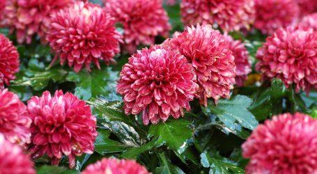 HGK: Korona prepolovila izvoz cvijeća, uvoz pao za gotovo četvrtinu