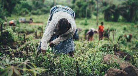 Svjetski program za hranu potiče lokalnu poljoprivredu