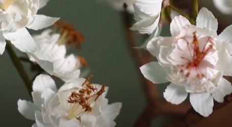 Buzhai kreacije od papira izgledaju kao pravo cvijeće