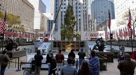 Malena sova doputovala u New York u krošnji božićnog drva