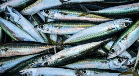 Istraživanje: Zašto je važno konzumirati lokalnu plavu ribu?