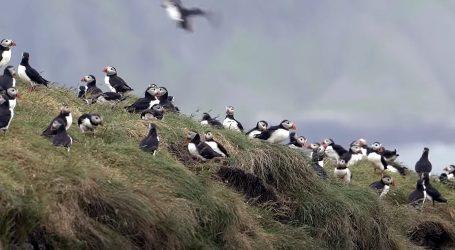Greenpeace zadovoljan stanjem u zaštićenim dijelovima oceana