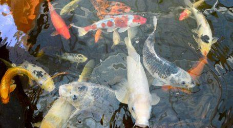 Gao Siji izrađuje umjetnička djela od ribljih kostiju