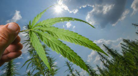 Meksiko: Vrt kanabisa u blizini Senata ubrzao odluku o legalizaciji marihuane