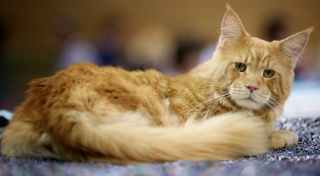 Mlaz vode iz slavine zbunio kućnu mačku