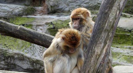 Tajland: Britanski glazbenik kratkim koncertom zabavio makakije