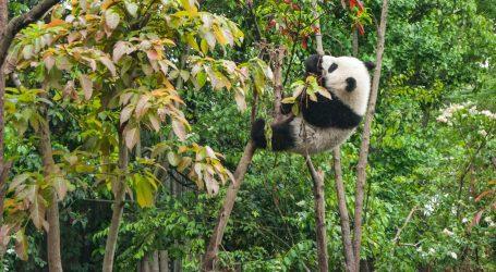 Pande su vrlo aktivne i na hladnoći