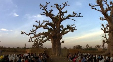 Stabla baobaba kao kulisa revije Tjedna mode u Dakaru