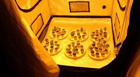 U improviziranim laboratorijima u Sesvetama pronađeno 18 kilograma marihuane