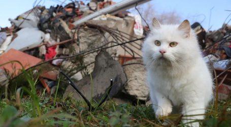 Prijatelji životinja: Ne slavite petardama, ljudi su prestravljeni potresima