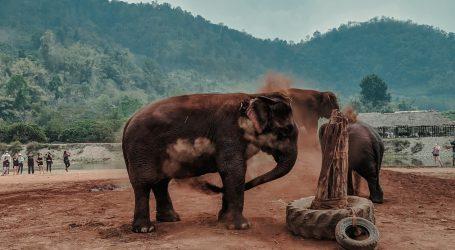 Kaavan više nije najusamljeniji slon na svijetu, uživa u društvu u Kambodži