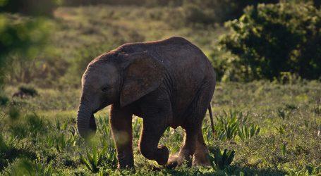 Japanski zoološki vrt predstavio prvu bebu slona rođenu u 138 godina