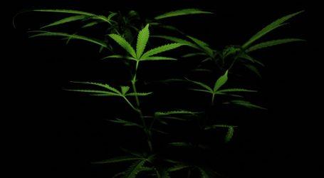Na preporuku WHO-a kanabis uklonjen s UN-ove liste najopasnijih droga